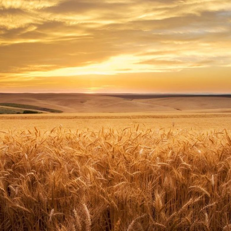 Ethische kwesties in voeding en landbouw